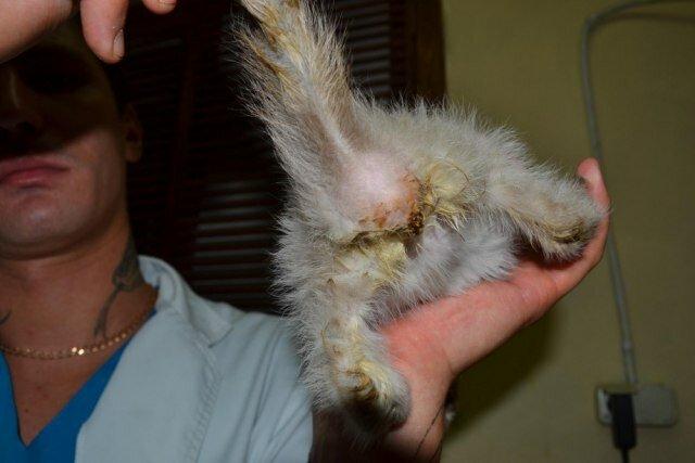 Шокновости! Котенок без ануса