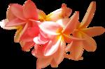 feli_syd_flowers2.png