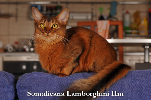 Somalicana Lamborghini