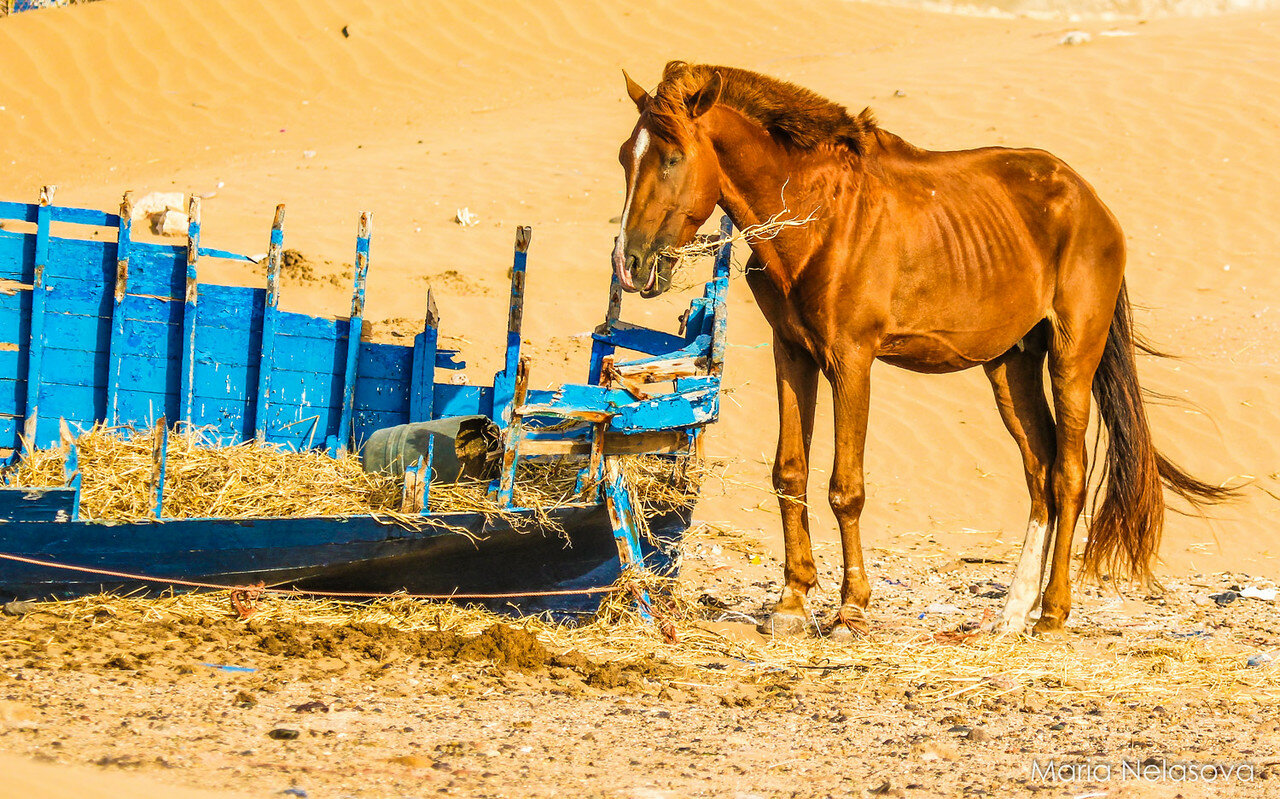 Рыбацкий стан. Марокко