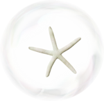 MRD_RT_bubble-shell-white.png