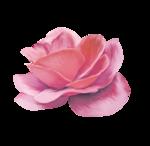 «Oh_Rose»  0_8786a_ba96464f_S