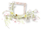 «whitebell flowers»  0_879a8_45219bfb_S