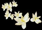 «whitebell flowers»  0_879b9_40a0db5d_S