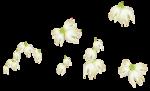 «whitebell flowers»  0_879ec_933f49e9_S