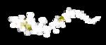 «scrapofangel_symphonie delamour» 0_87b91_3bd3b8c0_S
