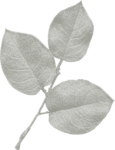 jss_oohhlala_rose leaves 1 gray light.png