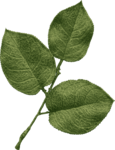 jss_oohhlala_rose leaves 1 green.png