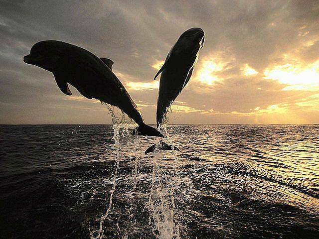 """Вышивка крестом.  Схемы автора  """"Marisya """".  190x143 крестов * 51 цветов * Теги: море, животные, дельфины."""