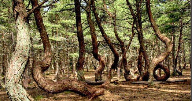 танцюючий ліс