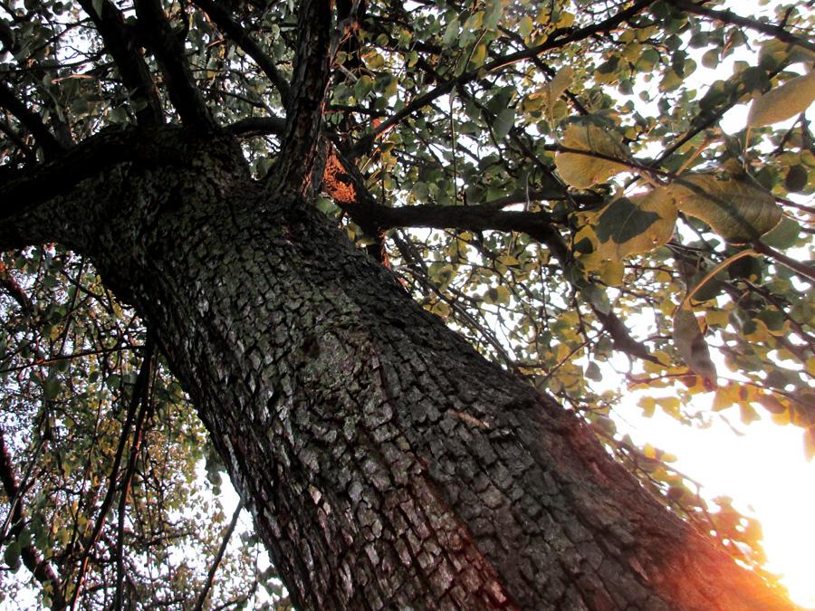 53 магия дерева 7