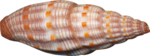 русалочка