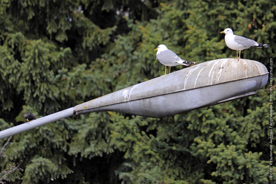 чайки в шлюзе