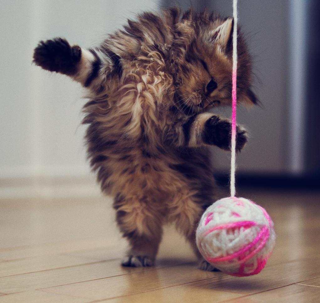 Фото клевых котят 17 фотография