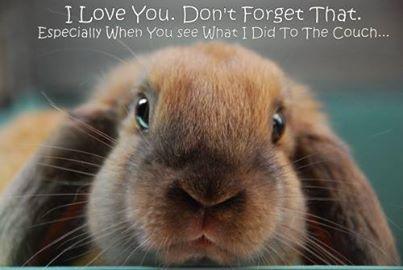 Я люблю тебя. Не забывай это..jpg