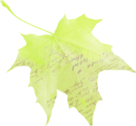 natali_autumn11_brush_leaf1.png