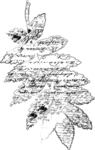 natali_autumn11_brush_leaf5a.png