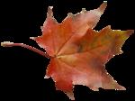 natali_autumn11_leaf2.png