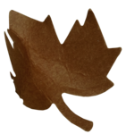 natali_autumn11_leaf10.png