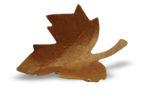 natali_autumn11_leaf11-sh2.png