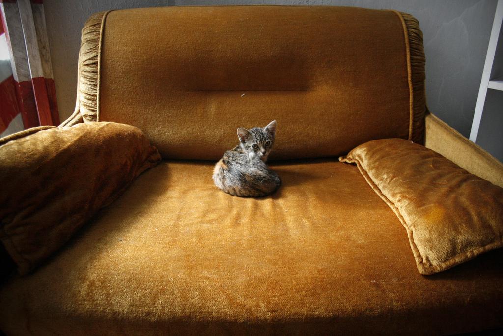 Маленький котенок в большом кресле фото 4