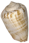 etc_dan_ssbeach_Shell2.png