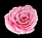 Noyemika_Valentines day (82).png