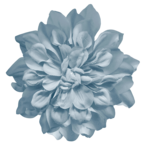 picturedesigns_fb2_flower2.png