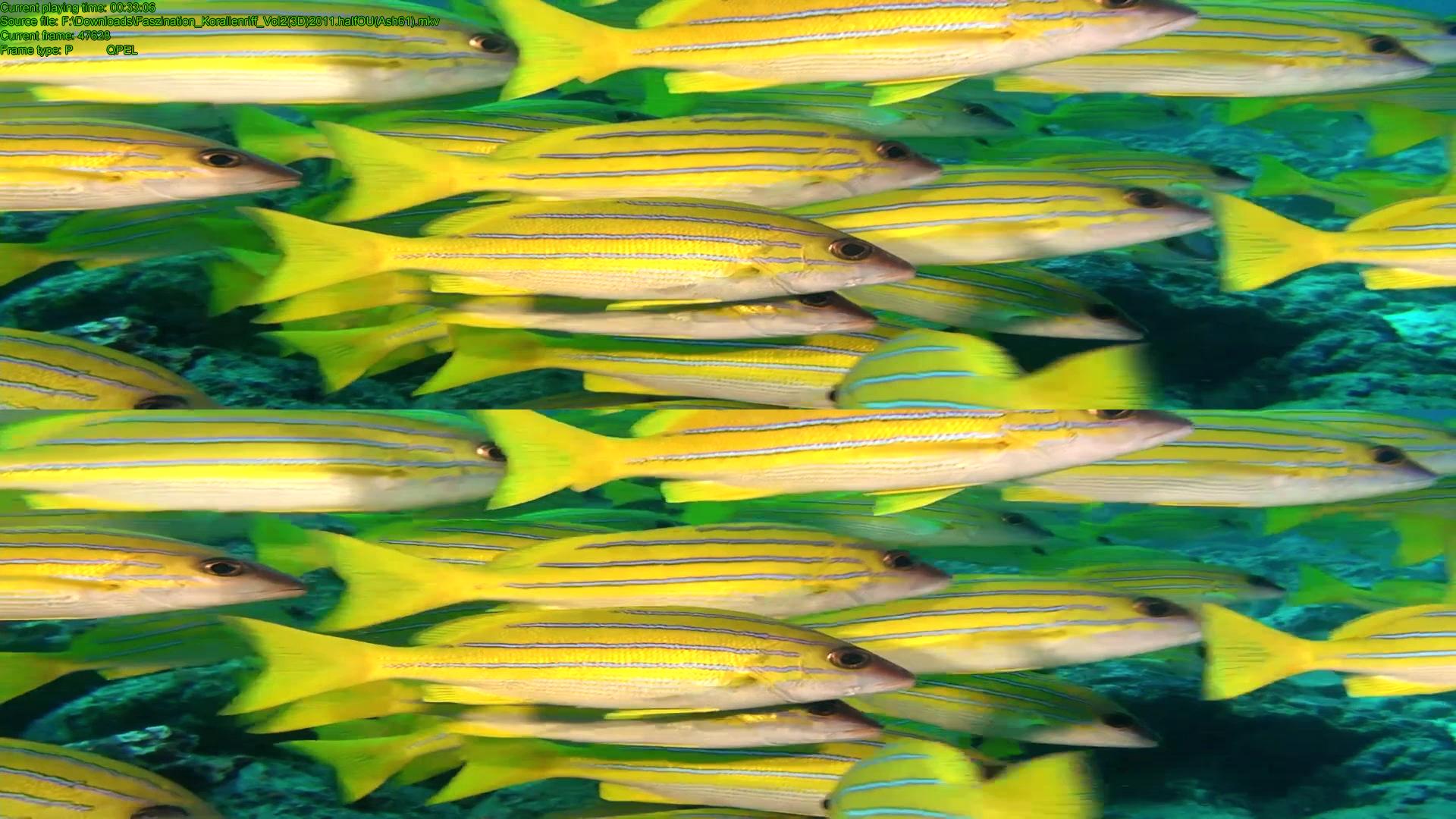 Коралловый риф 3d: подводный мир египта скачать торрент.