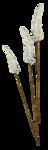 «whitebell flowers»  0_879f5_1224f189_S