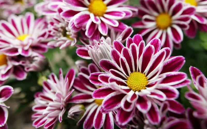 Красивые цветы HD обои Теги: