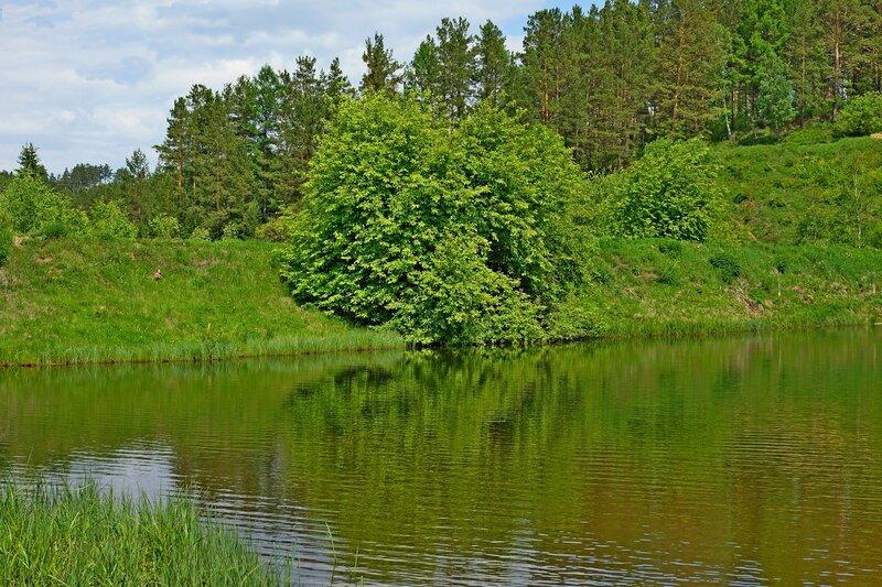 Дерево. :: Вадим Коржов - Социальная сеть о фотографии ФотоКто.