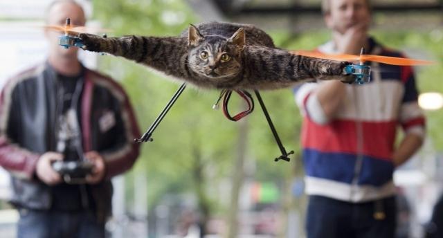 літаючий кіт