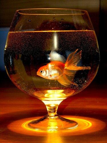 Рыбка туннелирует