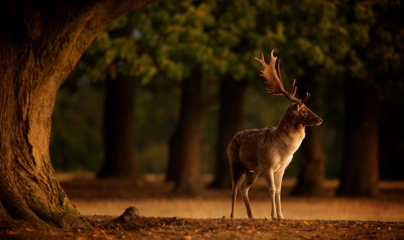 Фотографии Mark Bridger