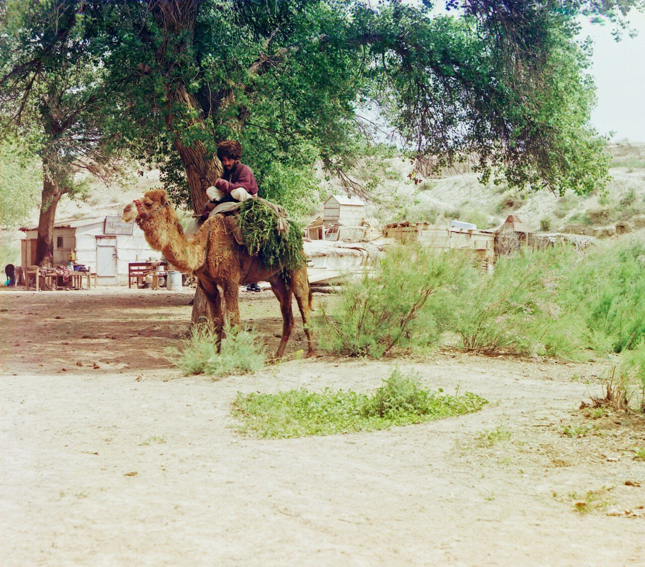 Окрестности Мерва. Близ Байрам-Али. Текинец на верблюде