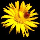 http://img-fotki.yandex.ru/get/6313/102699435.728/0_8da90_9c73038c_orig.png