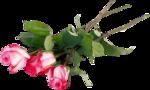 высококачественный цветочный клипарт розы
