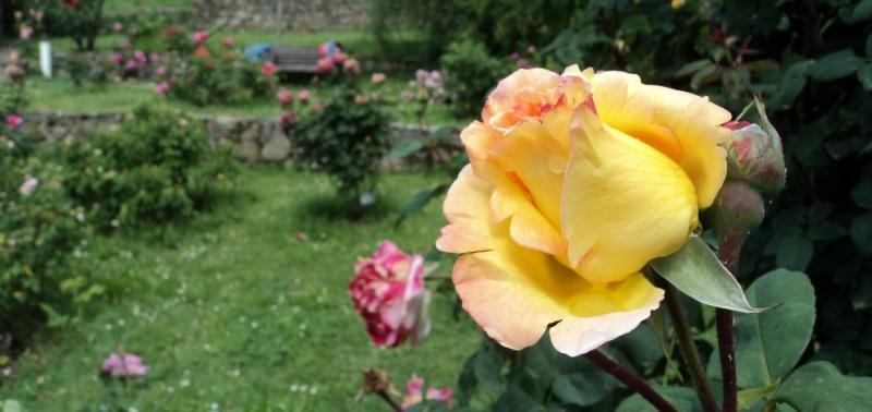 Сад роз во флоренции