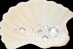 MRD_SeaMemories_shell-waterdrop.png