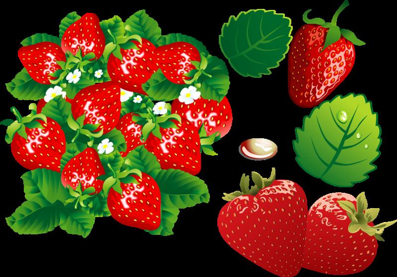 【引用】草莓香和醇厚……КЛИПАРТ(巴布亚新几内亚)在透明背景 - 枫林傲然 - .