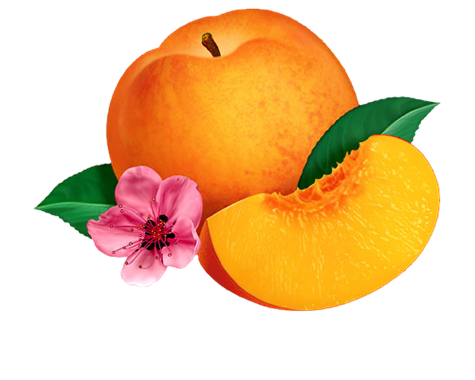 Fruit Png Images Fruits Png