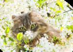 Коты кошки котята. И Цветы