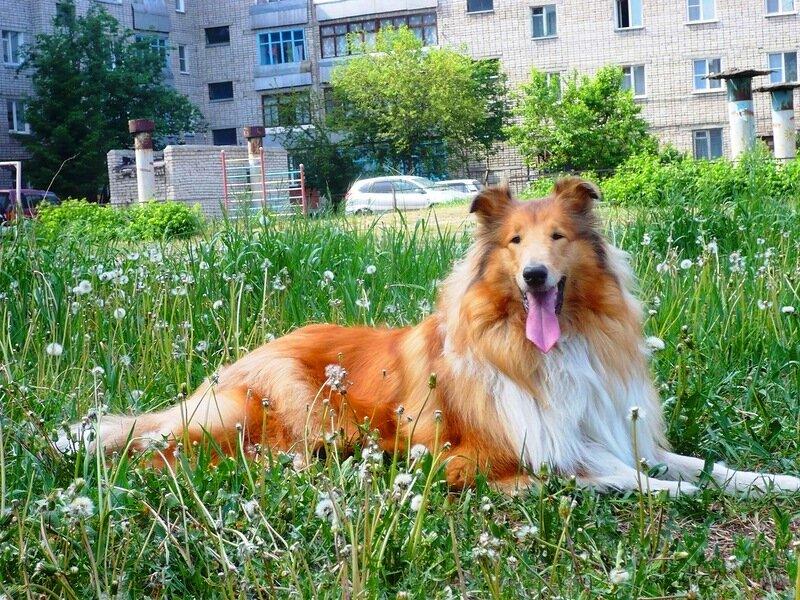 http://img-fotki.yandex.ru/get/6313/134559744.4/0_765cc_66a93cf0_XL.jpg