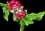 Carena Pink Gerbra Cluster 3.png