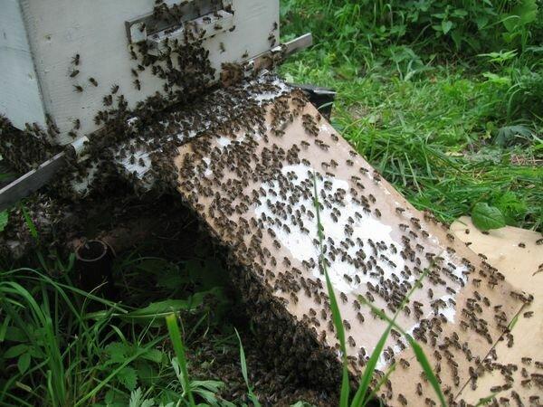 Известно много типов рамочных ульев, однако наибольшее распространение во всем мире получил многокорпусный улей.