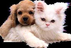 спаниель с котенком