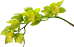 «Musical Flowers» 0_8a329_afdd8064_S