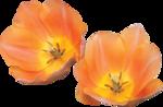 «Musical Flowers» 0_8a33b_e4c395b1_S