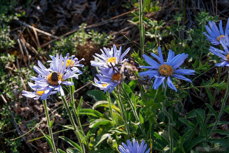 Красота уральской природы, фотографии лета